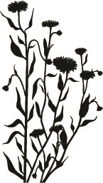 1316-05 Silhouette Wildflower #3