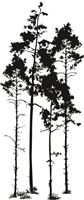1316-04 Silhouette Trees #1
