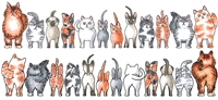 1322 Cats Front and Back