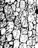 1342 Rock Wall background