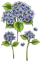 3407 Heavenly Hydrangeas